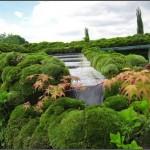 Зелёный уголок у себя в доме