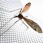 Ремонт окна и сетки от насекомых