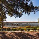В Калифорнии не хватило деревьев для Apple Park
