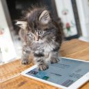 Apple может навсегда забыть об iPad mini